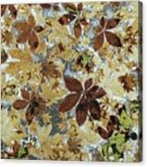 Autumnal Leaves Acrylic Print