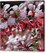 Autumnal Little Wonders_1 Acrylic Print
