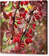 Autumnal Little Wonders_2 Acrylic Print by Halyna  Yarova