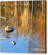 Autumnal Reflections Acrylic Print