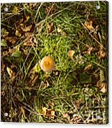 Autumnal Transformation Acrylic Print