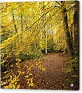 Autumnal Woodland II Acrylic Print