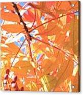 Autumn's Array 24 Acrylic Print
