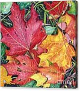 Autumn's Carpet Acrylic Print