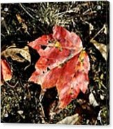 Autumns End Acrylic Print by JAMART Photography