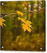 Autumns Fast Approach Acrylic Print