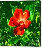 Autumn's  Flower Acrylic Print