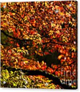Autumn's Glory Acrylic Print by Anne Gilbert