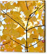 Autumn's Golden Leaves Acrylic Print by Jennie Marie Schell