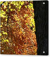 Autumn's Golds Acrylic Print