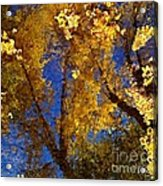 Autumns Reflections Acrylic Print by Steven Milner