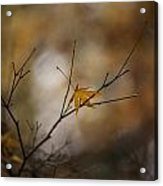 Autumns Solitude Acrylic Print