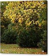 Autumn's Wondrous Colors 4 Acrylic Print