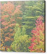 Autumntrees And Fog Acrylic Print
