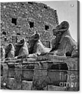 Avenue Of Sphinxes Acrylic Print