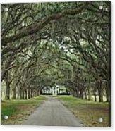 147706-avenue Of The Oaks  Acrylic Print