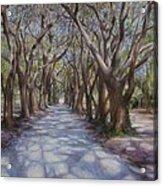 Avenue Of The Oaks Acrylic Print by Henry David Potwin
