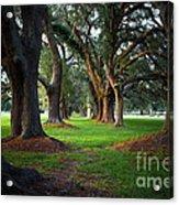 Avenue Of The Oaks On St Simons Island Ga Acrylic Print