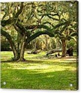 Avery Island Oaks Acrylic Print
