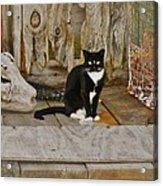 Avon Harbor Bxw Cat 9/05 Acrylic Print