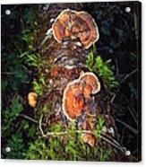 Awe Inspiring Fungi Acrylic Print
