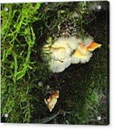 Awe Inspiring Fungi Three Acrylic Print