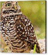 Awe Inspiring Owl Acrylic Print by Andres Leon