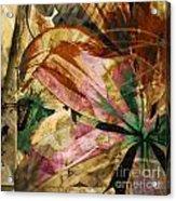 Awed II Acrylic Print