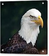 Awesome Eagle Acrylic Print by Tammy Smith