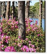 Azalea At The Lake Acrylic Print