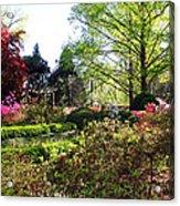 Azalea Garden Acrylic Print