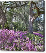 Azalea In Bloom Acrylic Print