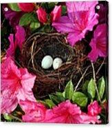 Azalea Surprise Acrylic Print by Karen Wiles