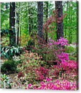 Azaleas Red Maple And Magnolia Trees Acrylic Print