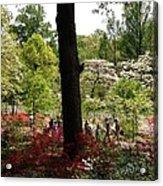 Azaleas Us National Arboretum Acrylic Print