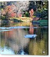 Azelea Asticou Autumn Reflections Acrylic Print