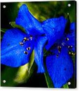Azure Acrylic Print