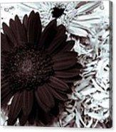 B/w Flower Acrylic Print by Ankeeta Bansal