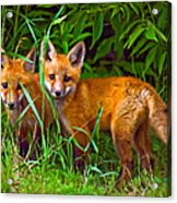 Babes In The Woods Oil Acrylic Print