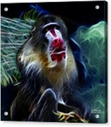 Baboon 4239 - F Acrylic Print