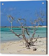 Baby Beach With Driftwood Acrylic Print