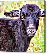 Baby Billy Acrylic Print
