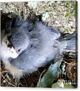 Baby Bird Learns A Lesson Acrylic Print