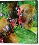 Baby Bird Nest In Hong Kong Bird Market Acrylic Print