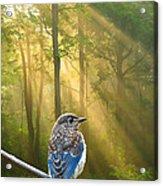 Baby Blue In Morning Fog Sunlight Acrylic Print