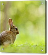 Baby Bunny In The Forest Acrylic Print