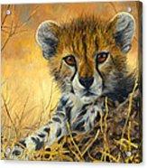 Baby Cheetah  Acrylic Print