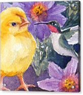 Baby Chick And Hummingbird Acrylic Print