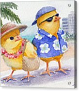 Baby Chicks In Honolulu Hawaii Acrylic Print