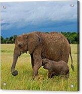 Baby Elaphant Acrylic Print